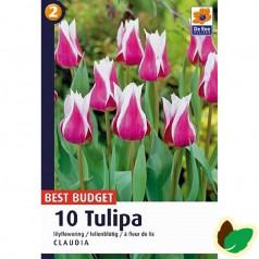 Tulipanløg Claudia - Liljeblomstrende Tulipan - 10 Løg