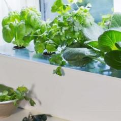 Hydroponisk dyrkningskasse - Startpakke 'Harvy'