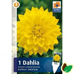 Dahlia Decorative Golden Emblem / Georgin