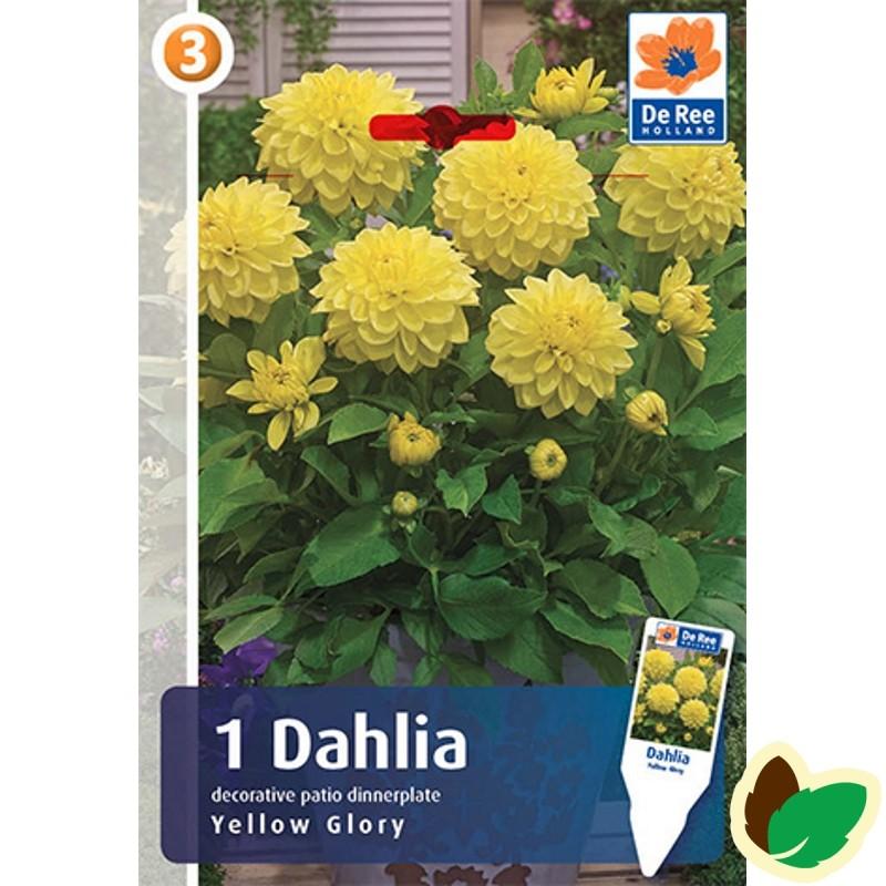 Dahlia Dinnerplate Decorative Yellow Glory / Georgin