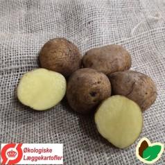 Økologiske Læggekartofler Anouk -- 25 Kg.