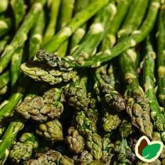 10 stk. Asparges planter 'Steniva' barrodsplanter