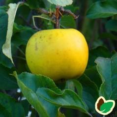 Æbletræ Per Smed