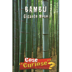 Bambus frø, Gigant Moso