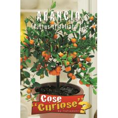 Appelsin frø
