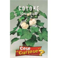 Bomuldsplante Frø - Gossypium
