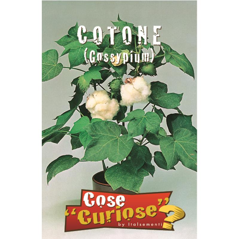Bomuldsplante Gossypium