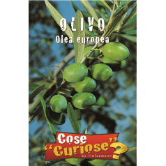 Oliven frø - Olea europaea