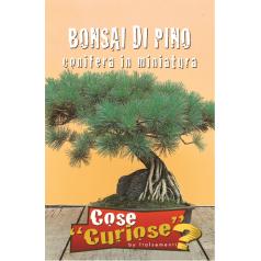 Fyr frø - Bonsai