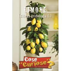 Citron frø - Citrus Trifoliata