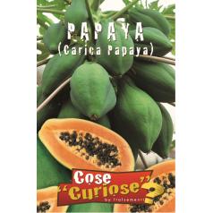 Melontræ / Papaya Frø