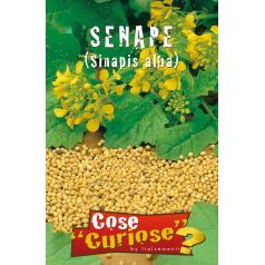 Sennep Frø - Brassica Nigra