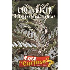 Lakridsrod / Glat lakrids - Glycyrrhiza Glabra Frø