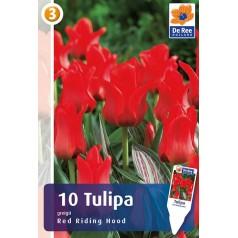 Tulipanløg Red Riding Hood - Gregii Tulipan / 10 Løg