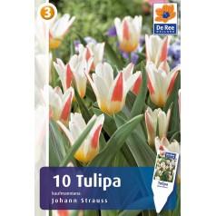 Tulipanløg - Johann Strauss / 10 Løg