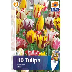Tulipanløg - Rembrandt Mix / 10 Løg