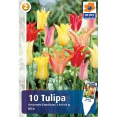Tulipanløg - Lilyflowering Mix / 10 Løg