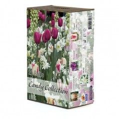 Tulipan & blanding - Candy Collection