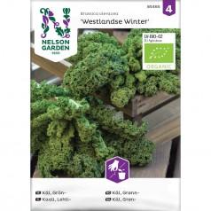 Økologisk Grønkål frø 'Westlandse Winter'