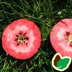 Æbletræ Vitalstar®