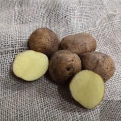 Anouk Læggekartofler -- 10 Kg.