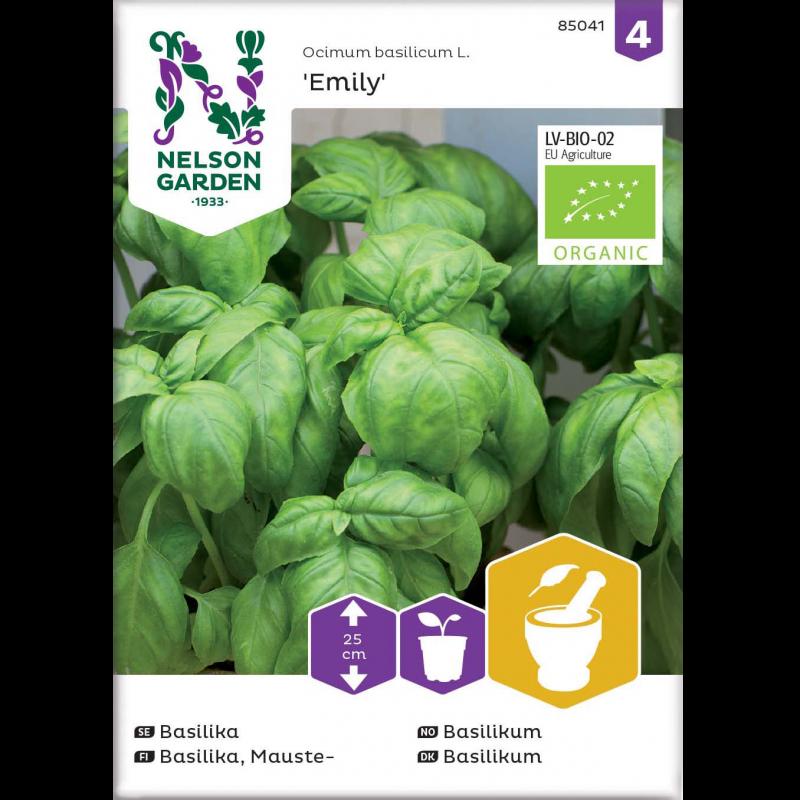 Økologisk Basilikum frø