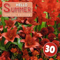 Blomsterløg mix 'Hello Summer! Red'