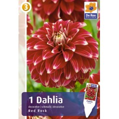 Dahlia Decorative Red Rock