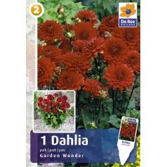 Dahlia Park Garden Wonder