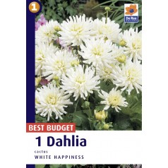 Dahlia Cactus White Happiness / Georgin