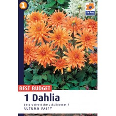 Dahlia Decorative Autumn Fairy