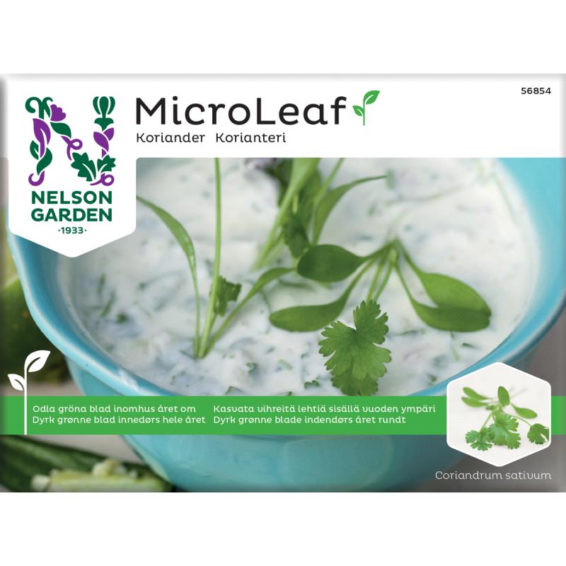 Micro Leaf frø, Koriander