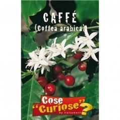 Kaffeplante Frø - Coffea Arabica