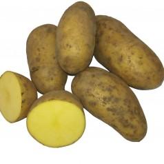 Økologiske Læggekartofler Allians -- 25 Kg.