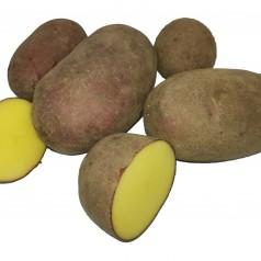 Økologiske Læggekartofler Alouette -- 25 Kg.