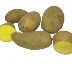 Økologiske Læggekartofler Annabelle -- 25 Kg.
