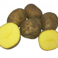 Økologiske Læggekartofler Belana -- 25 Kg.