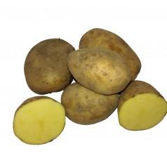 Økologiske Læggekartofler Bellinda -- 25 Kg.