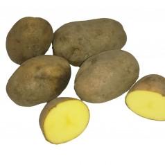 Økologiske Læggekartofler Ditta -- 25 Kg.