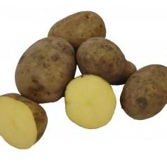 Elfe Læggekartofler –- 25 Kg.