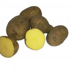Økologiske Læggekartofler Elfe –- 25 Kg.