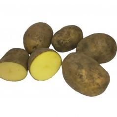 Økologiske Læggekartofler Jelly -- 25 Kg.
