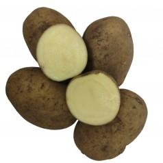 Bintje Læggekartofler -- 10 Kg.