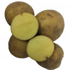 Borwina Læggekartofler -- 25 Kg.
