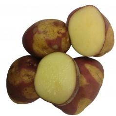 Celebration Læggekartofler - 2 Kg.