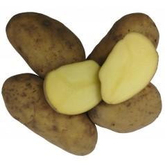 Exquisa Læggekartofler - 2 Kg.