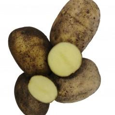 Fakse Læggekartofler - 2 Kg.