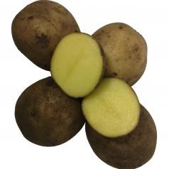 Gala Læggekartofler -- 10 Kg.