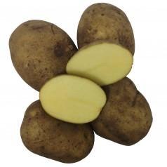 Hamlet Læggekartofler - 2 Kg.