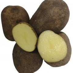 Hansa Læggekartofler - 2 Kg.